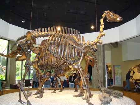 LOS ANGELES, CALIFORNIA/USA – February 21: A prehistoric fossil at the George C. Page Museum on February 21, 2009. 版權商用圖片 - 19298170
