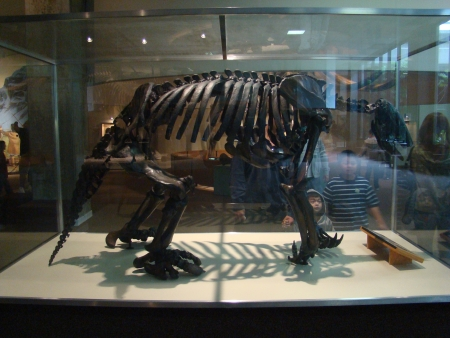brea: LOS ANGELES, CALIFORNIAUSA – February 21: A sloth fossil at the George C. Page Museum on February 21, 2009.