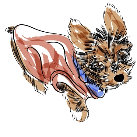 yorkshire: An image of a teacup yorkshire terrier puppy wearing a shirt