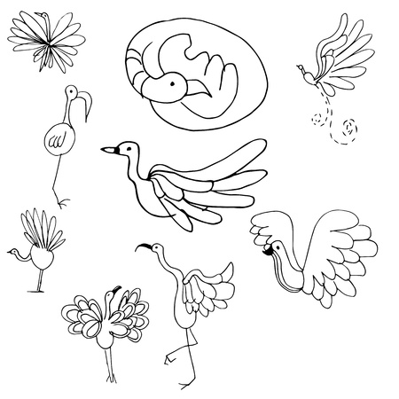 An image of a bird set. Vector