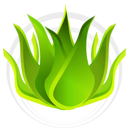 aloe vera plant: An image of a 3d aloe vera plant.