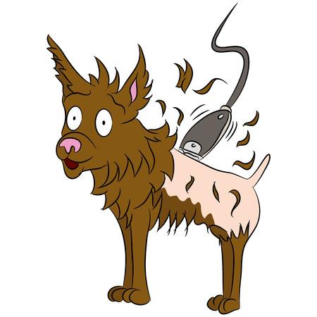 Een afbeelding van een hond wordt geschoren. Stock Illustratie