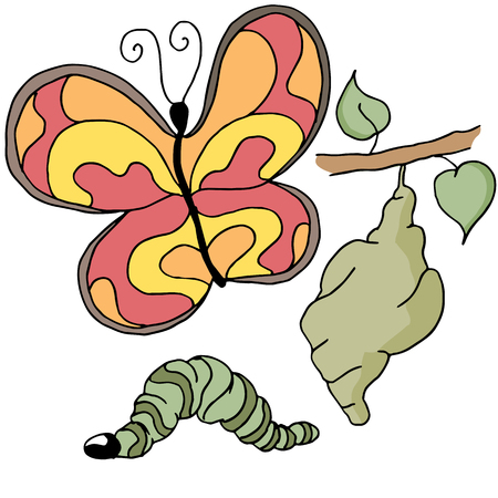 metamorphosis: An image of the stages of a butterfly.