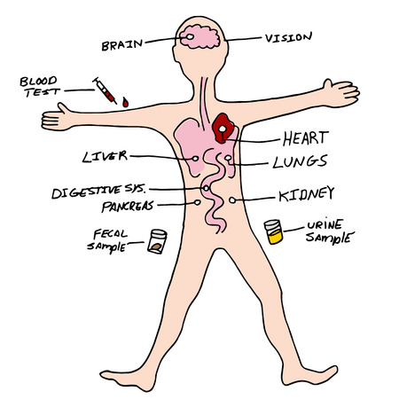 An image of a human lab testing chart. Vector