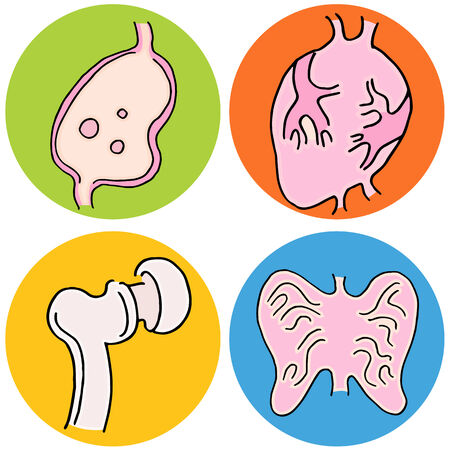 An image of human biology icons. Vector