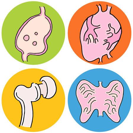 human biology: An image of human biology icons.