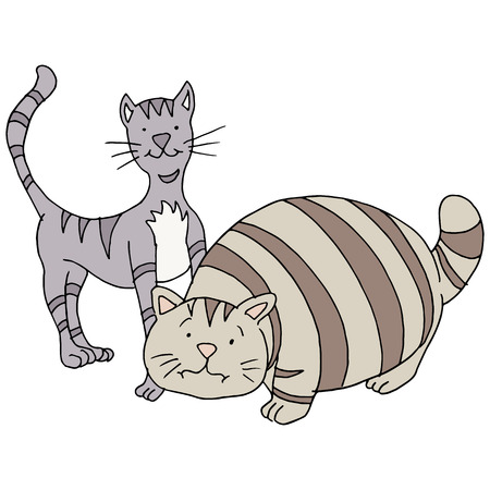 An image of a fat and skinny cat. Vector