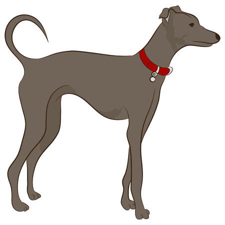 greyhound: An image of a greyhound dog.
