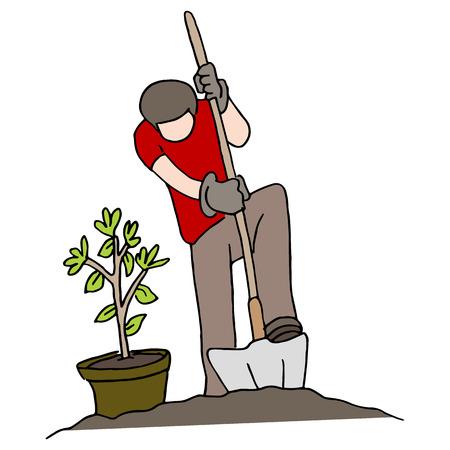 Een afbeelding van een persoon die een boom plant.