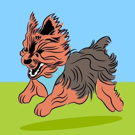 An image of a running yorshire terrier dog.