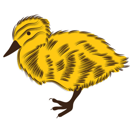 An image of a duckling.