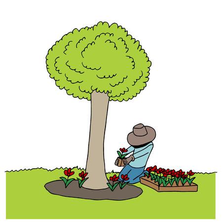 baum pflanzen: Mann pflanzen Blumen unter einem Baum. Illustration
