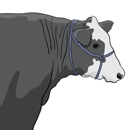 Een close-up beeld van een zwarte en witte koe. Stockfoto - 29191063