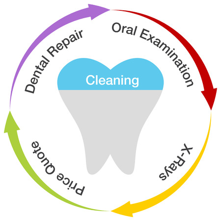 a dental chart. Vector