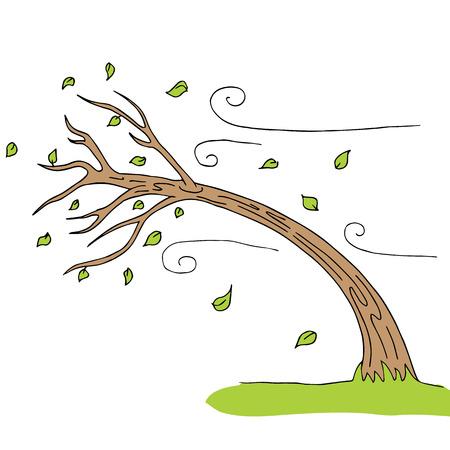 een wind geblazen boom.