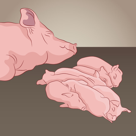 piglets: a pig and her piglets.