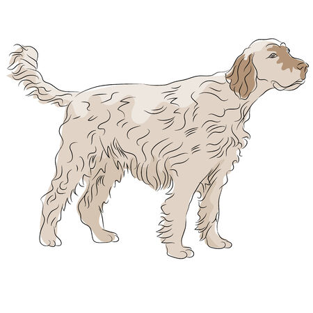 An image of a shaggy haired dog. Illustration