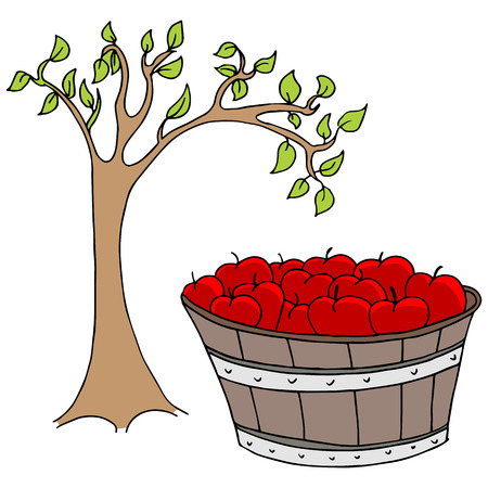 An image of an apple basket and tree. Vector