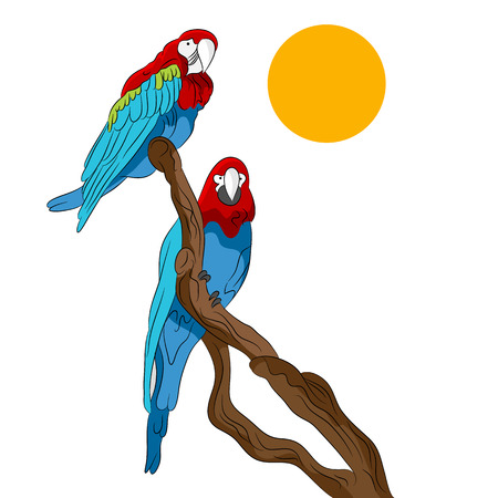 the two parrots: An image of two parrots sitting on a tree branch.