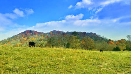 forge: An image of a cow in a pasture.