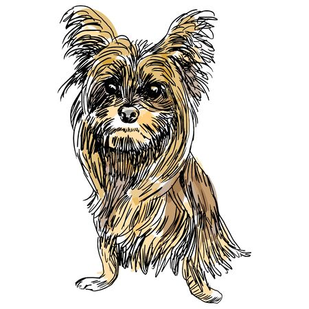 An image of a sketch of a Yorkshire terrier dog. Vector