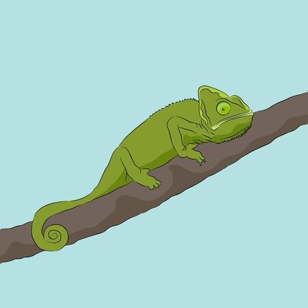An image of a chameleon sitting on a branch.