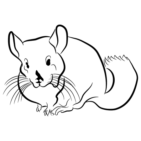 An image of a chinchilla.