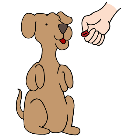 An image of a Dog Begging Treat.