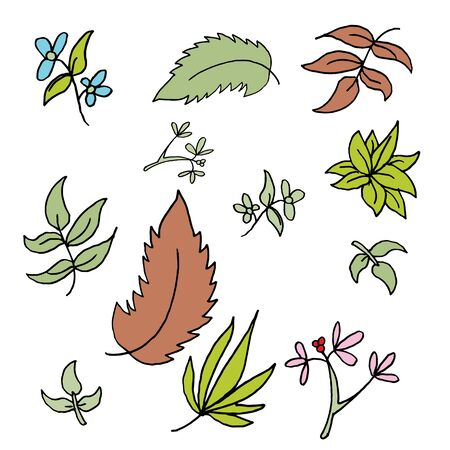 drawings image: An image of a set of leaf drawings.