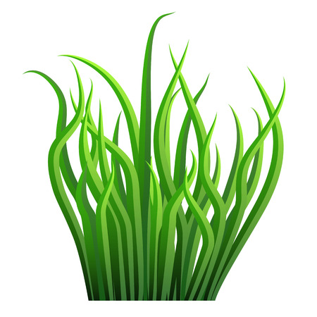 grass blades: An image of a grass blade bunch.