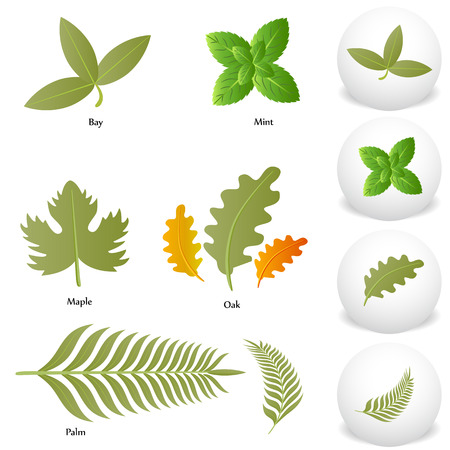 An image of Mint Oak Maple Bay Palm Leaf icon drawing Set.