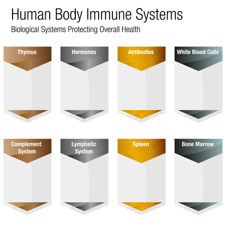 An image of a metallic bronze gold silver human body immune systems chart. Foto de archivo - 96754003