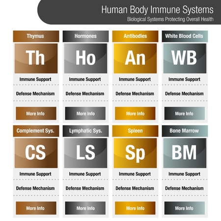 An image of a metallic bronze gold silver Human Body Immune Systems Chart. Illustration