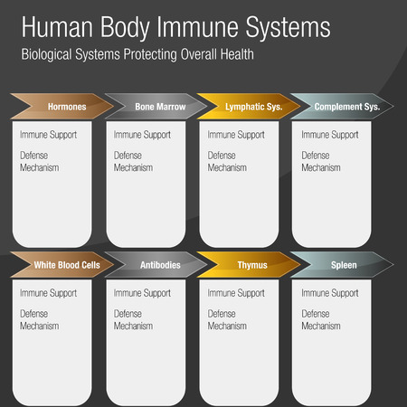Image of a metallic bronze gold silver Human Body Immune Systems Chart. Stock fotó - 97054280