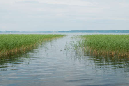 beautiful lake with green cane on the sky backgorund Stock Photo - 7661012