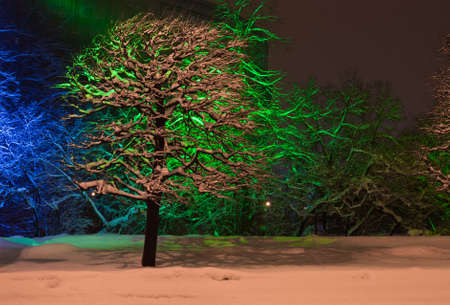 snow-covered trees with color illumination at night in winter photo
