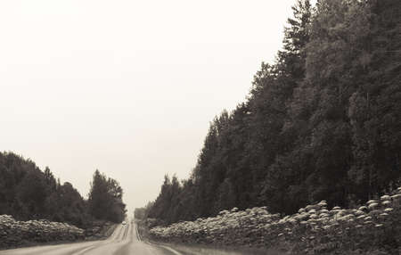 Grayscale countryside road with another cars photo