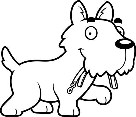 aberdeen: A cartoon illustration of a Scottie walking with a leash in his mouth.