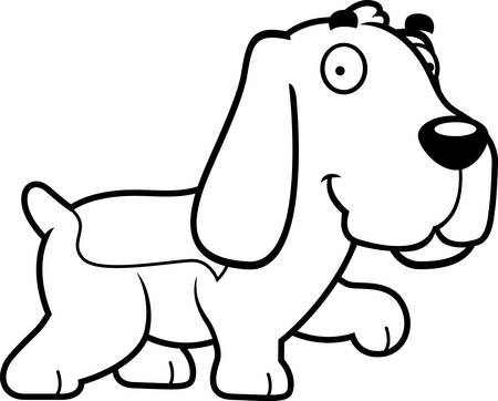 basset hound: A cartoon illustration of a Basset Hound walking. Illustration