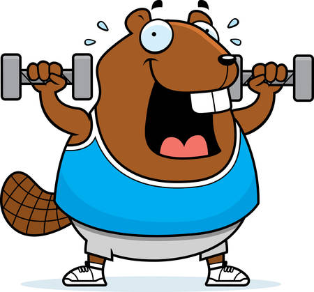 A cartoon illustration of a beaver lifting dumbbell weights. Ilustrace