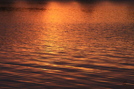 Golden pond abstract