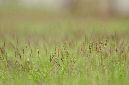 grasses in the lawn
