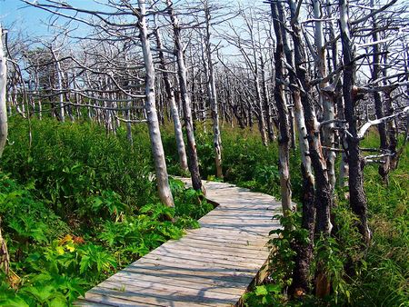 Pathway into dead forest photo