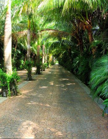 長い影付きドライブ thuough ジャングル 写真素材