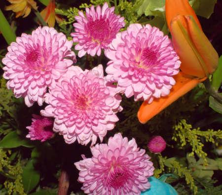フラワーアレンジメント満開 5 つの紫色の花のクローズ アップ