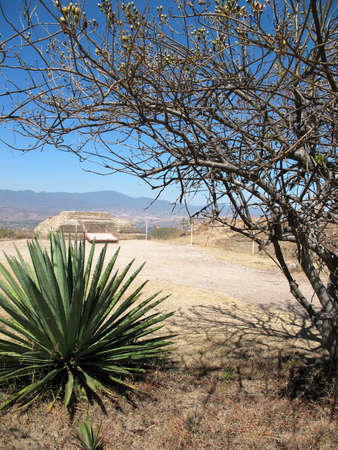oaxaca: Agave plant with Mexican pyramid in background