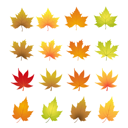 Hojas de otoño Foto de archivo - 41131114
