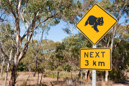 Roadside sign warning of Koalas within the area. Stock Photo - 21018049