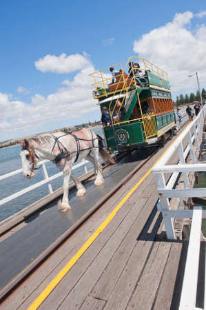 clydesdale: ADELAIDE, AUSTRALIA - December 26 2014:The historic horse drawn tram, ferrying passengers from Victor Harbor to Granite Island in South Australia
