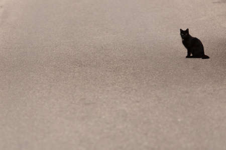 flatter: Black stray cat is standing on asphalt with selective focus Stock Photo